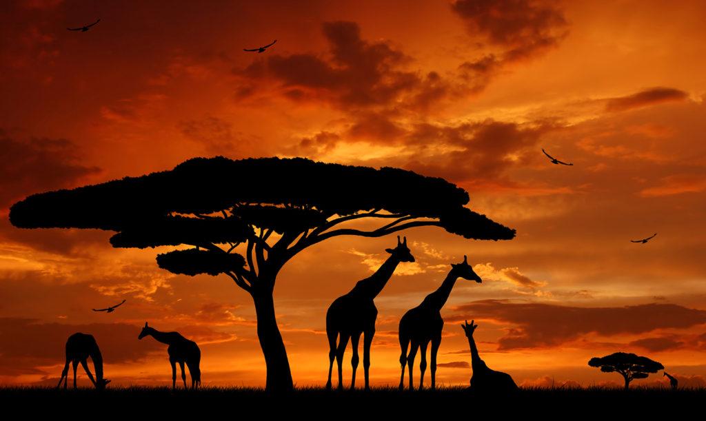아프리카와 두바이 16일 일정